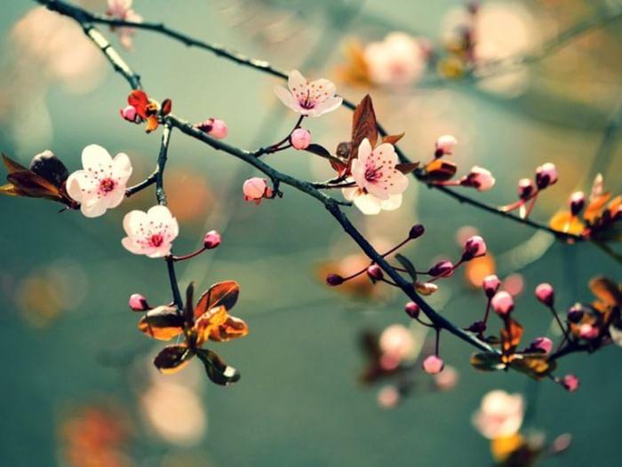 Конкурс «Весна надежд»