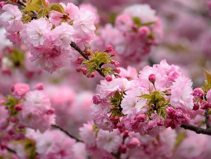 Развлекательная программа «Праздник Весны и Труда»