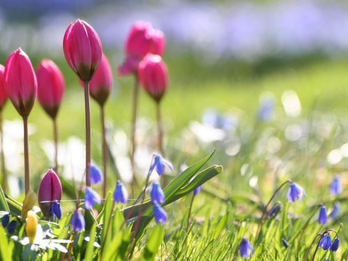 Мастер-класс по каллиграфии «Весна красна»