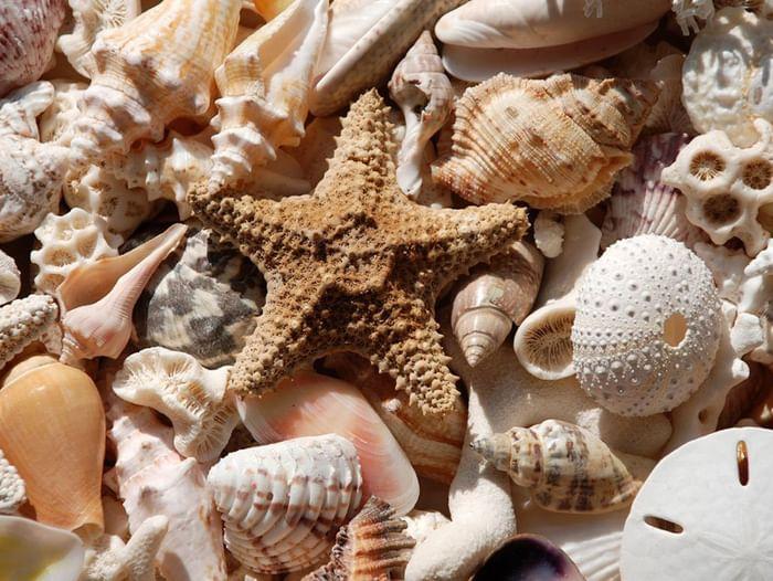 Выставка «Тайны морских глубин»