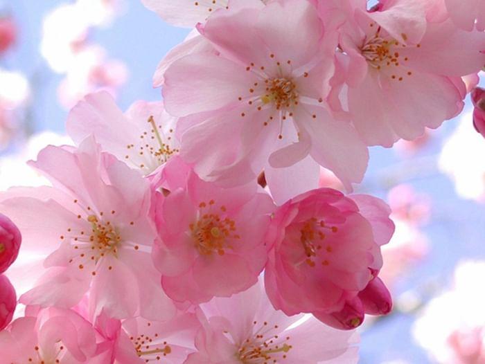 Концерт «1 Мая – Праздник Весны и Труда»
