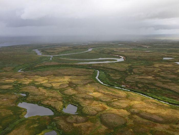 Выставка «Кладовые солнца: болотные экосистемы Арктики»