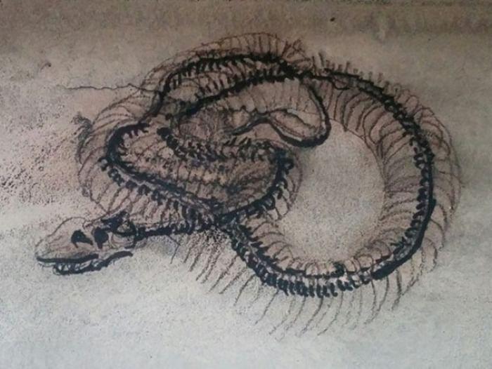 Выставка «Гномы-пожиратели змей в музее»