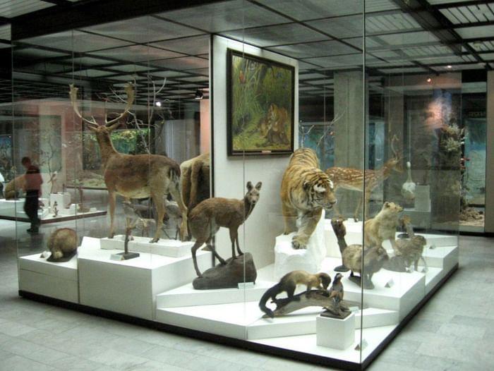 Программа «По музеям мира»