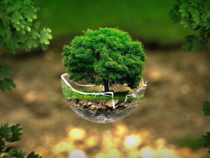 Литературно-экологическая викторина «За красоту родной земли!»