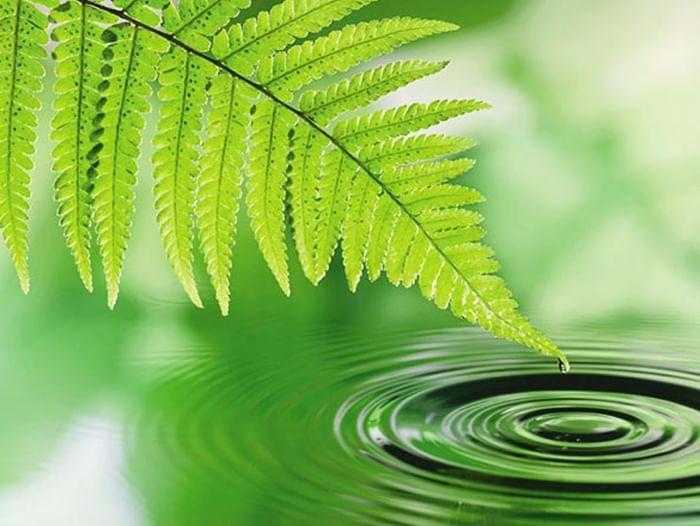 Беседа «Горизонты экологической системы»